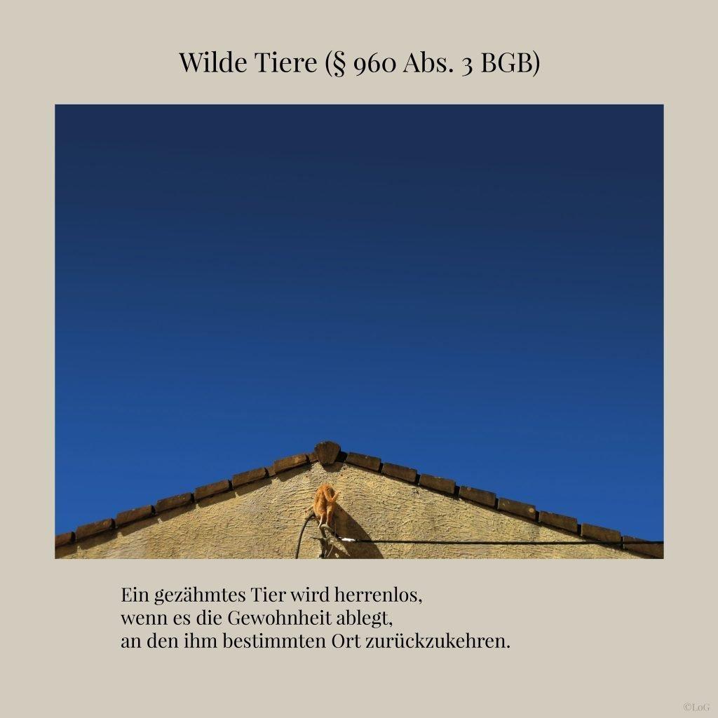 Wilde-Tiere-(§-960-Abs.-3-BGB)-3-2048