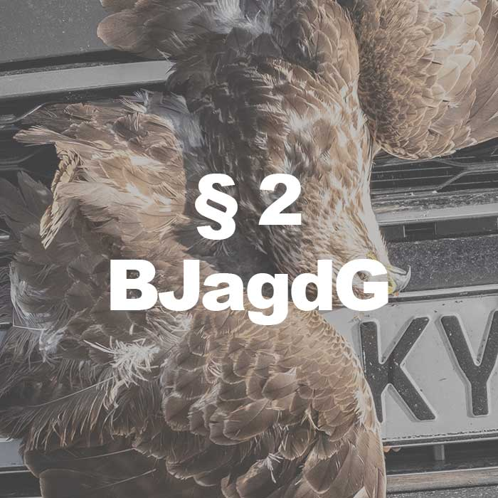 Fotografie zu Jagdrecht-(§-2-Abs.-1-Nr.-2-BJagdG)featured-700