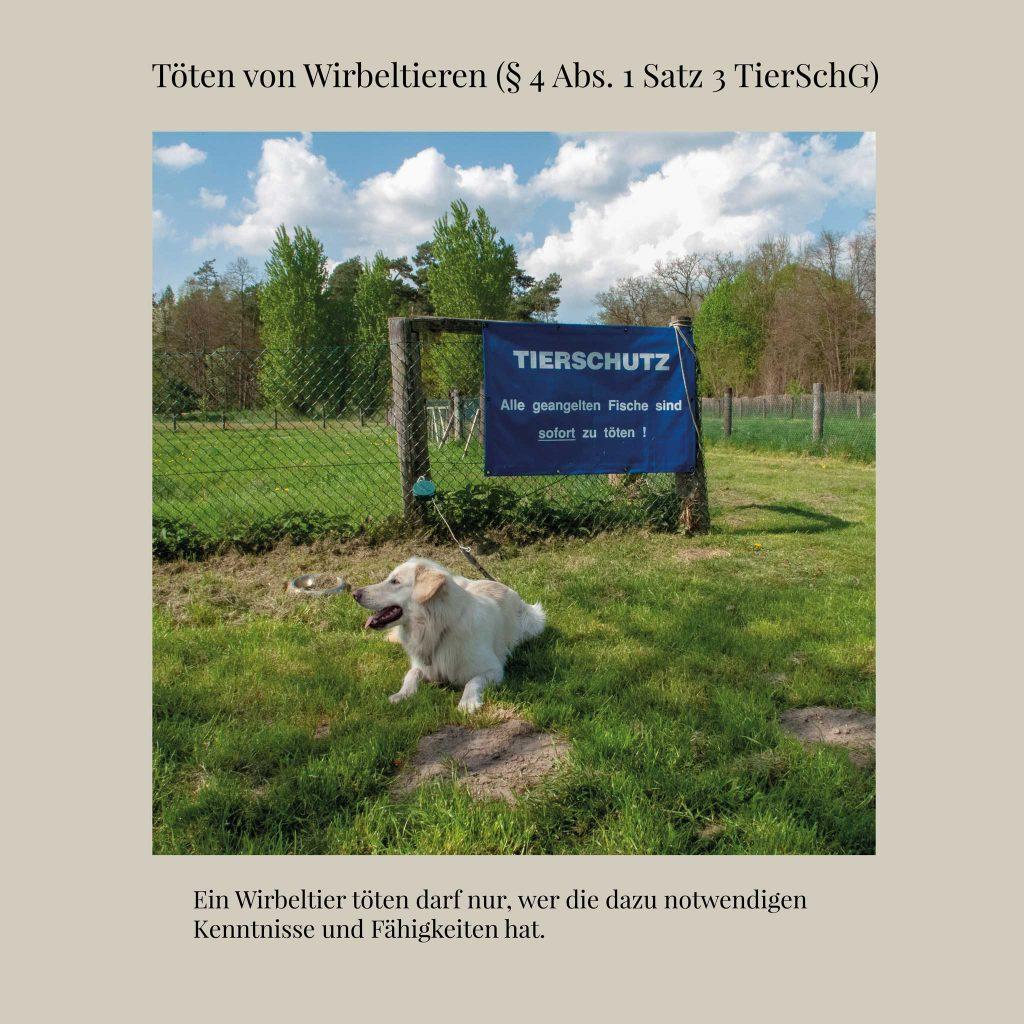 Töten-von-Wirbeltieren-(§-4-Abs.-1-Satz-3-TierSchG)-webcut2048